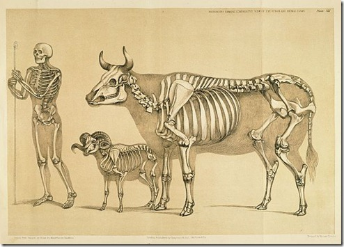 A Comparative View of the Human and Animal Frame by Benjamin Waterhouse Hawkins, 1860
